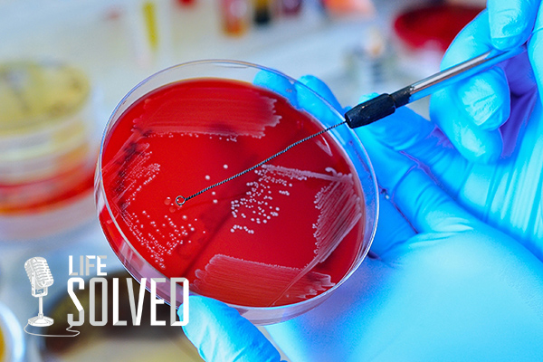 Close up of scientist swabbing red petri dish. Life Solved logo in corner